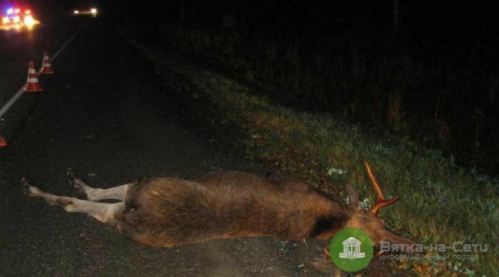 Под Кировом «ВАЗ» насмерть сбил лося