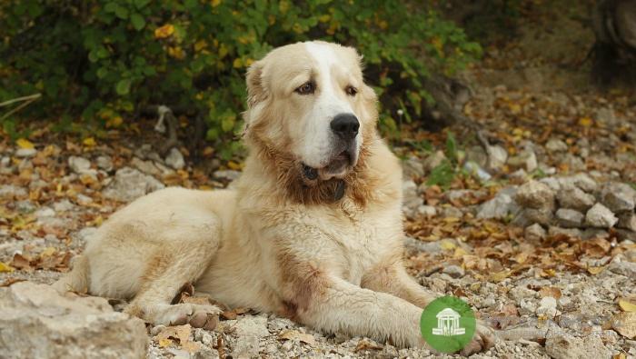 Полицейские застрелили двух собак, напавших на чепчан