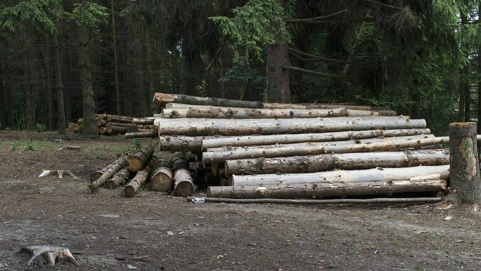 В санчурском лесничестве незаконно вырубили лес на 1,1 млн рублей