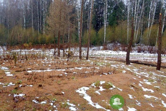 В кировском дендропарке высадили редкие редкие породы деревьев и кустарников