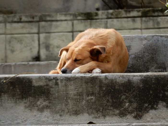 Неизвестные выпустили из приюта около 100 бездомных собак