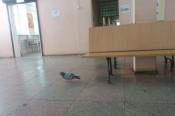 Необычный пассажир на чепецком автовокзале