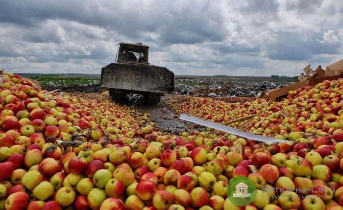 В Кировской области уничтожено более тонны яблок и персиков