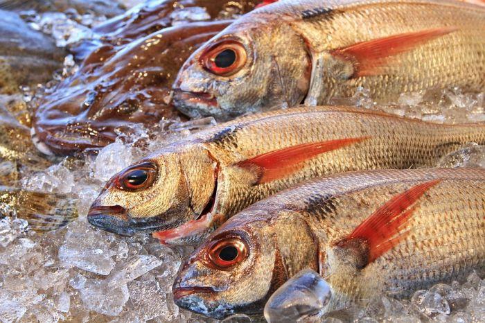Как определить качество рыбы?