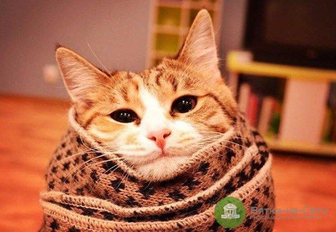 Отопление в жилых домах Кирова начнут включать уже сегодня