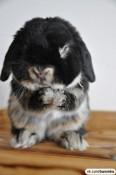 В Вятских Полянах ввели карантин: таким методом ликвидируют болезнь кроликов
