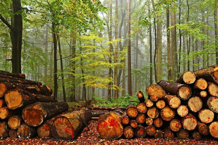 От незаконных рубок леса область понесла ущерб в 140 млн руб.