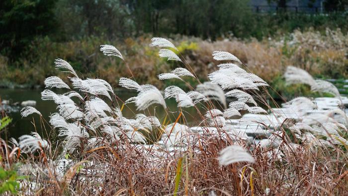 МЧС предупреждает кировчан о сильном ветре