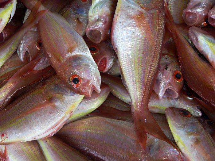 Мужчина избил пенсионера за то, что тот не дал ему рыбы