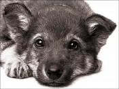 «Мой Пёс-барбос»