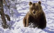Медведя, пытавшегося разодрать мужчину в Кировской области, застрелили