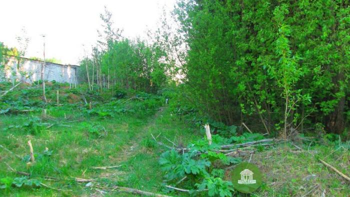 Следователи возбудили дело по факту обнаружения в Зубаревском лесу трупа младенца