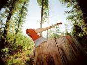 Главу Департамента лесного хозяйства Равиля Ахмадуллина подозревают в превышении должностных полномочий