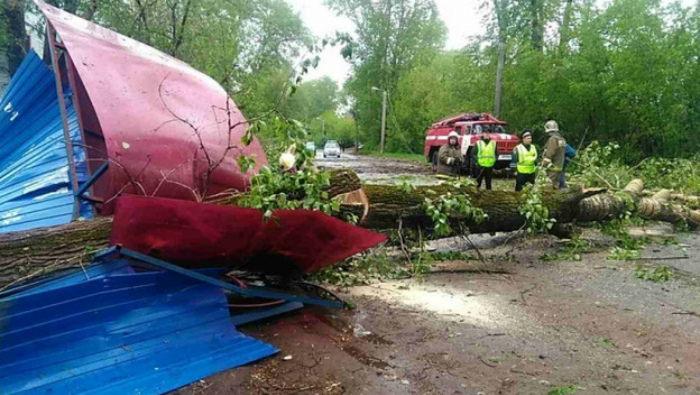 В Вересниках дерево упало на остановку общественного транспорта, есть пострадавшие