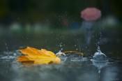 Киров ожидают очередные дождливые выходные
