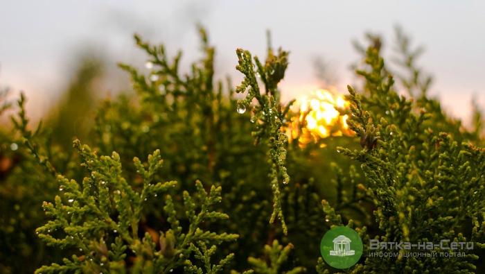 Хвойные растения на садовом участке: как ухаживать?