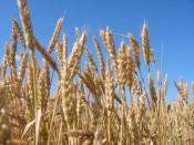 Селяне Кировской области получили 1,4 миллиарда рублей господдержки
