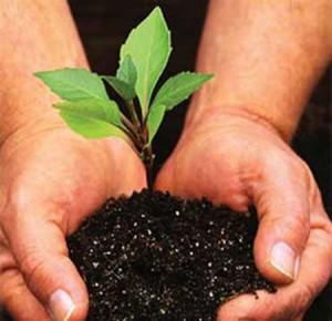 Школа начинающего садовода