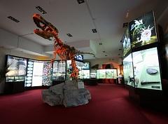 Экспозиции Вятского палеонтологического музея